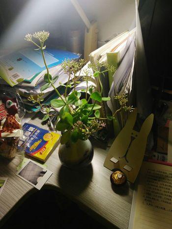 随便折的小草,没想到插在瓶子里活了一个多月,还要开花了。 First Eyeem Photo