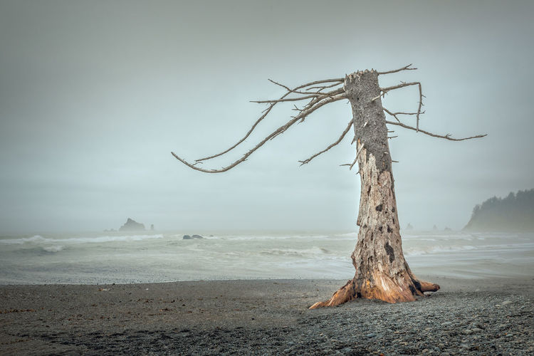 Driftwood on tree by sea against sky
