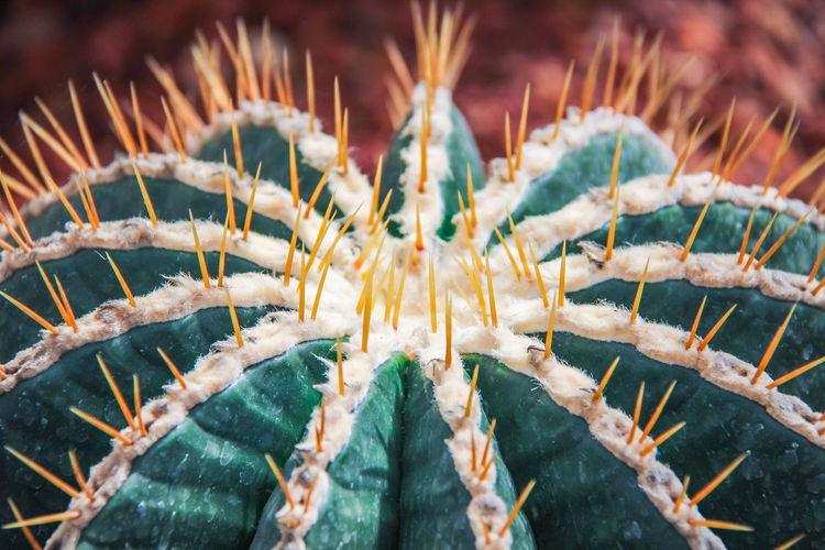 Close-up of cactus and its spike