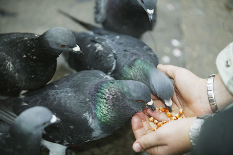 Close-Up Of Hand Feeding Bird