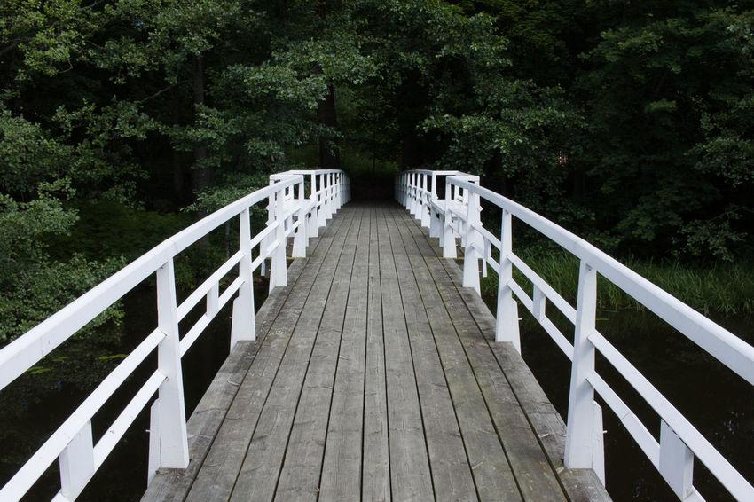 Bridge Bridge - Man Made Structure Day Footbridge Nature No People Outdoors The Way Forward Tree Wood - Material Wood Paneling The Week On EyeEm