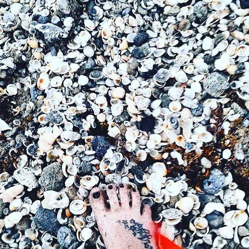 Sea Seaside Tattooed Foot Joy Seashells, Rocks, Sand Seashell Seashell, By The Sea Shore