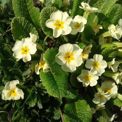 Как же не заинстаграмить красивые цветочки:)