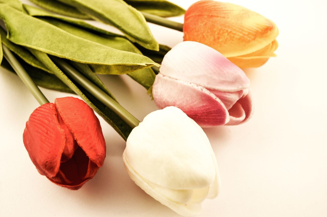 High Angle View Of Tulips On White Background