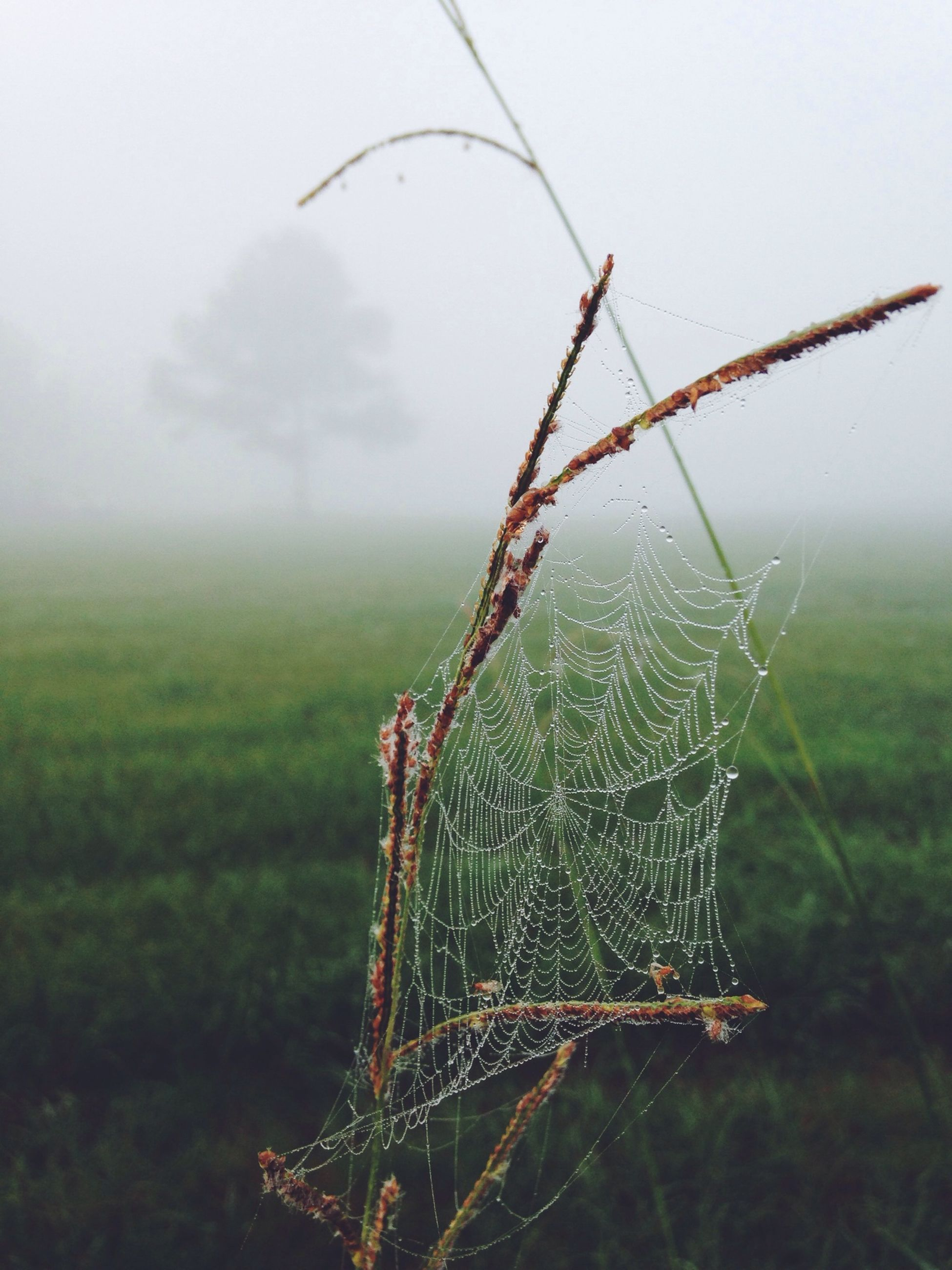focus on foreground, nature, weather, drop, plant, tranquility, growth, close-up, fog, foggy, green color, beauty in nature, spider web, field, grass, sky, day, wet, water, outdoors