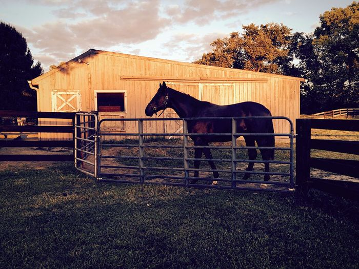 Colt Horse Horses Red Yearling Farm Farm Life Horse Riding Barn Red Barn