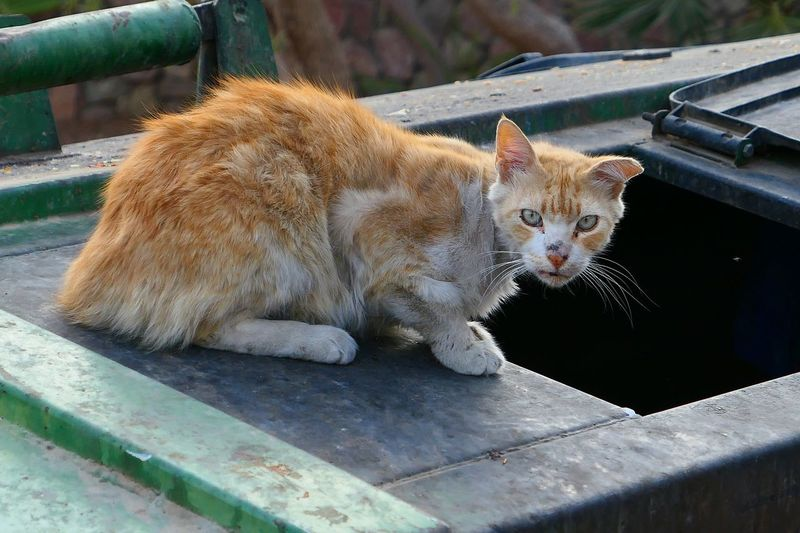 Portrait of cat sitting on water storage tank