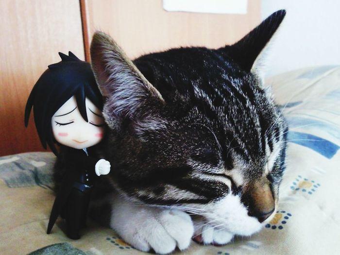 くろしつい Kuroshitsui Cute Cat
