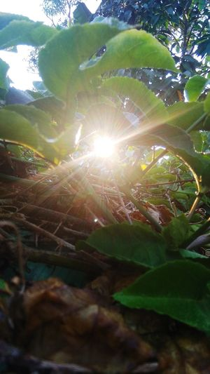 morning EyeEmNewHere Light And Shadow Light Sunlight Sunrise Fresh Leaf Leaf Close-up Animal Themes Sky Plant Green Color Sun Shining Sunbeam
