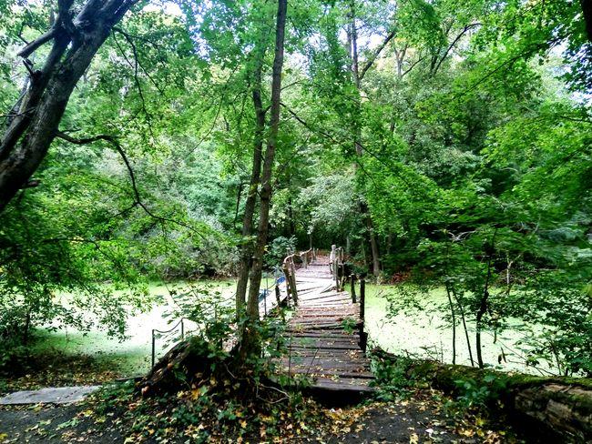 Old wooden bridge River Tree Water Growing Greenery Woods Flora Spring Countryside Green Grassland