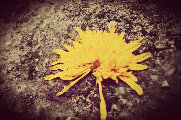 Nature Flower Naturehippys
