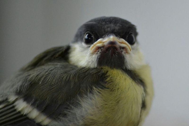 Babyvogel First Eyeem Photo