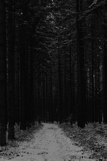 Dark Darkness Lonely Cold Temperature Environment Forest Frightening Frightening Moment Nature No People Plant Snow Thread Threatening Tree Winter WoodLand