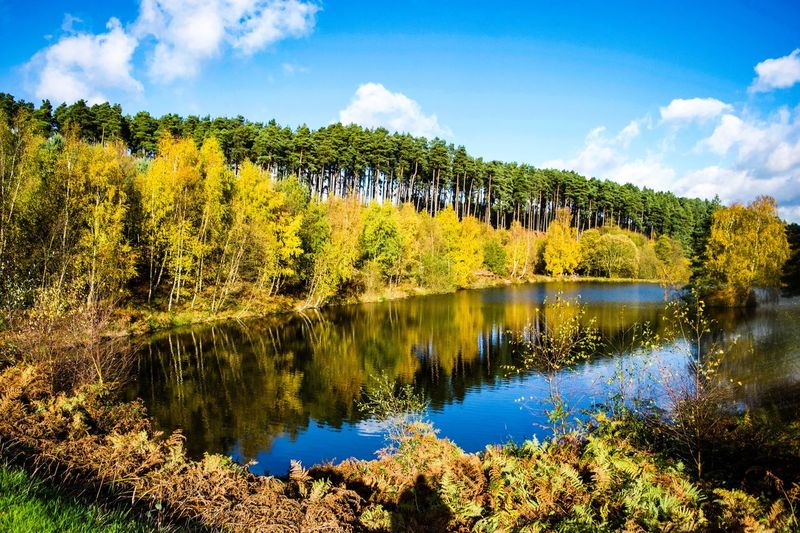 Autumn Chase 1 Autumn colors Autumn Cannockchase Cannock Chase Cannock Plant Reflection Water Sky Tranquility Tree Cloud - Sky Beauty In Nature Lake Nature No People Green Color Outdoors Waterfront Tranquil Scene Idyllic Day