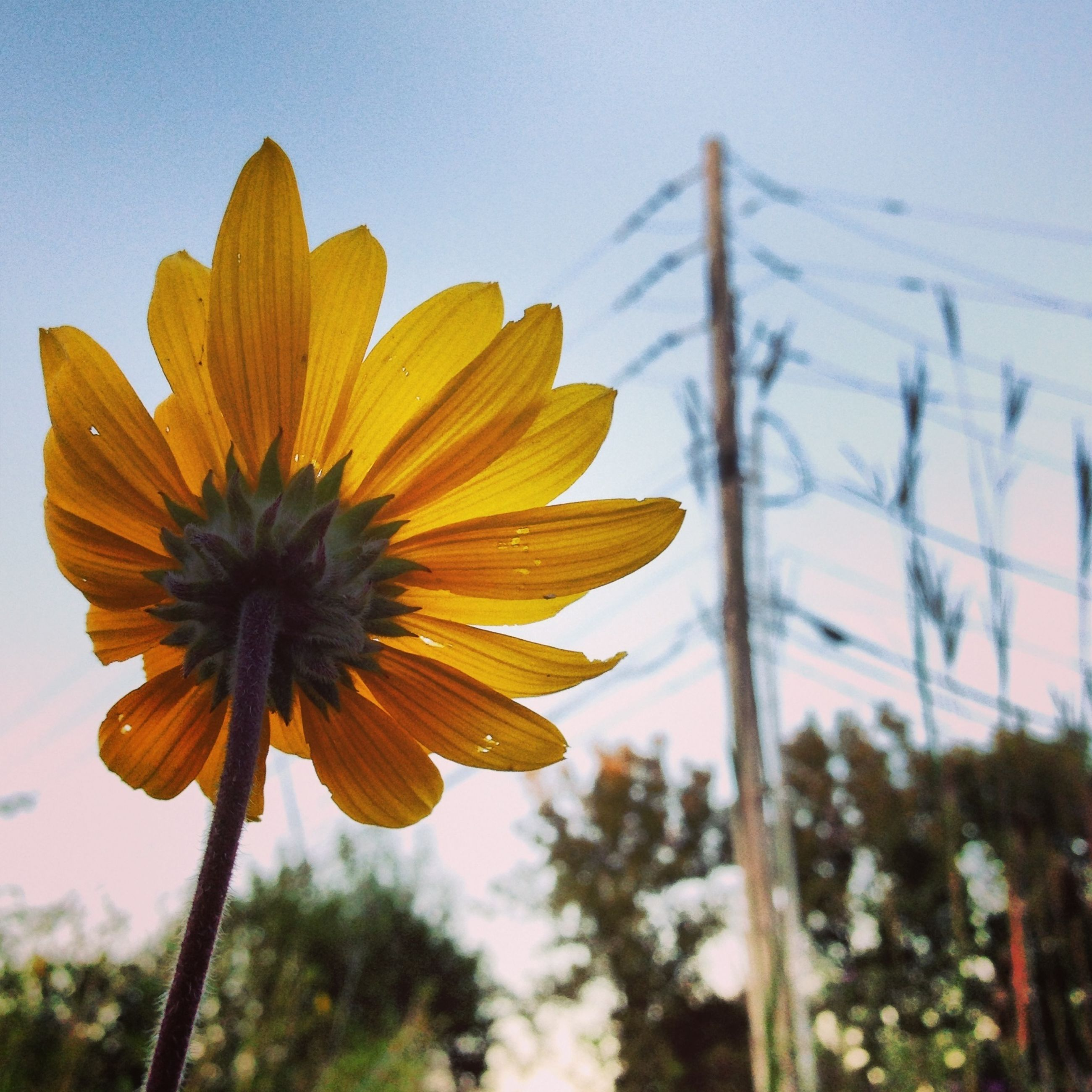 flower, fragility, freshness, petal, flower head, focus on foreground, yellow, close-up, growth, beauty in nature, plant, blooming, stem, nature, sky, single flower, pollen, in bloom, low angle view, outdoors