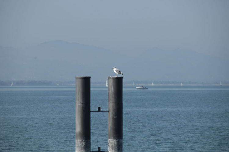 Seagull perching on column by sea against sky