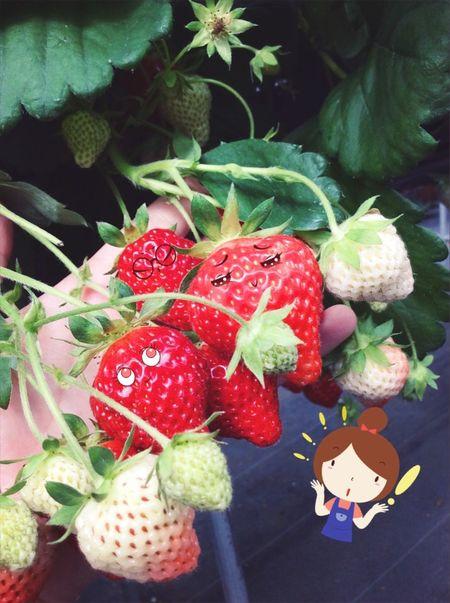 Ichigo Fruits ♡ Summer ☀