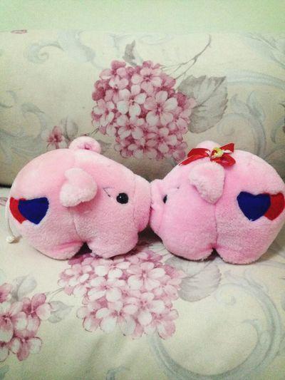 Kissing Pig ???