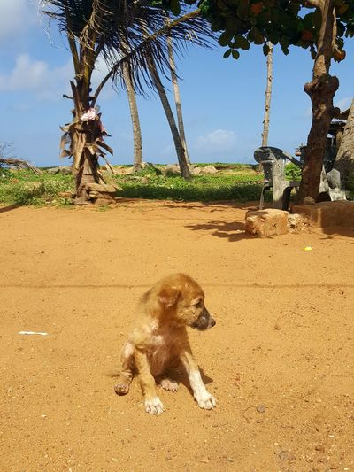 Baby dog Sand