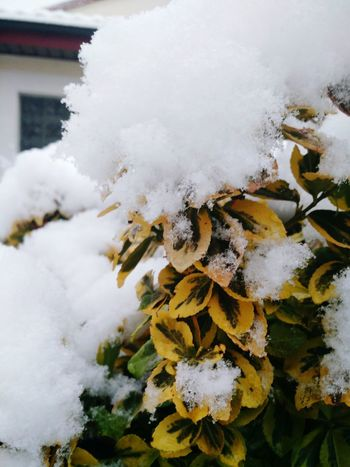 Nature Close-up Winter Fragility Plant Cold Temperature Softness