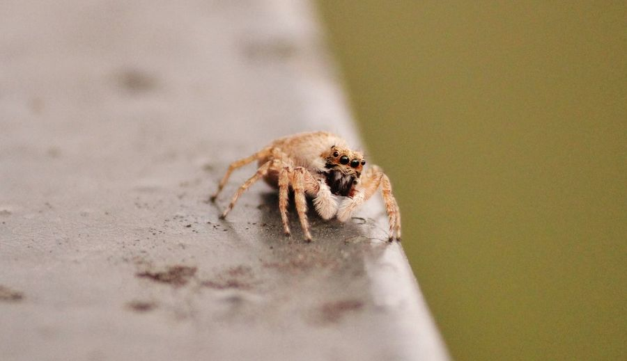 Close-Up Of Spider On Railing