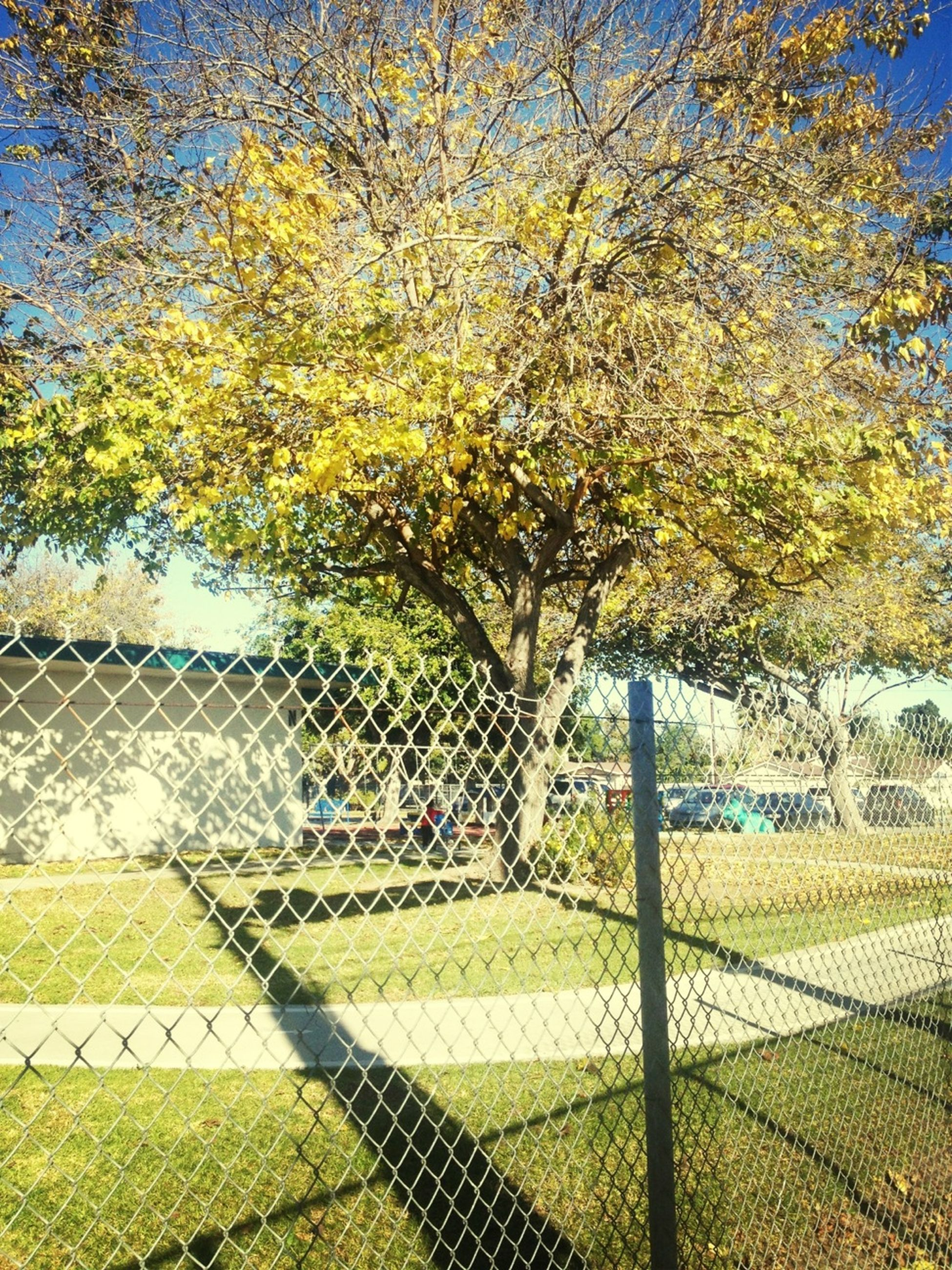 fence, chainlink fence, tree, protection, safety, metal, park - man made space, branch, sunlight, growth, railing, pattern, nature, security, day, green color, sky, outdoors, no people, grass