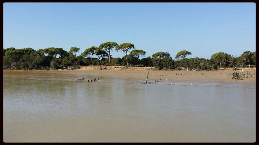 Parque natural de Doñana. Taking Photos Rios De España Enjoying Life Parques Naturales