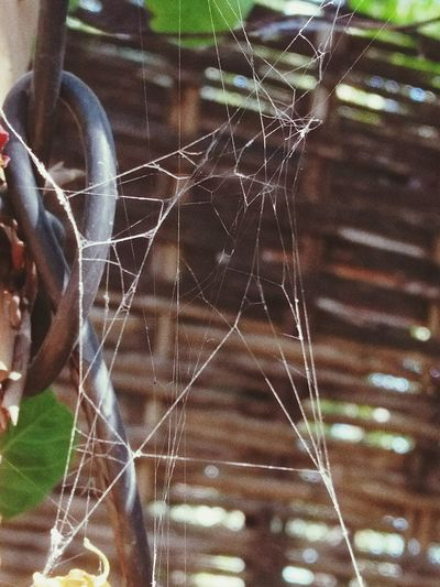 Nature's Love Spider Web Web Close-up Day No People Outdoors Nature Fragility