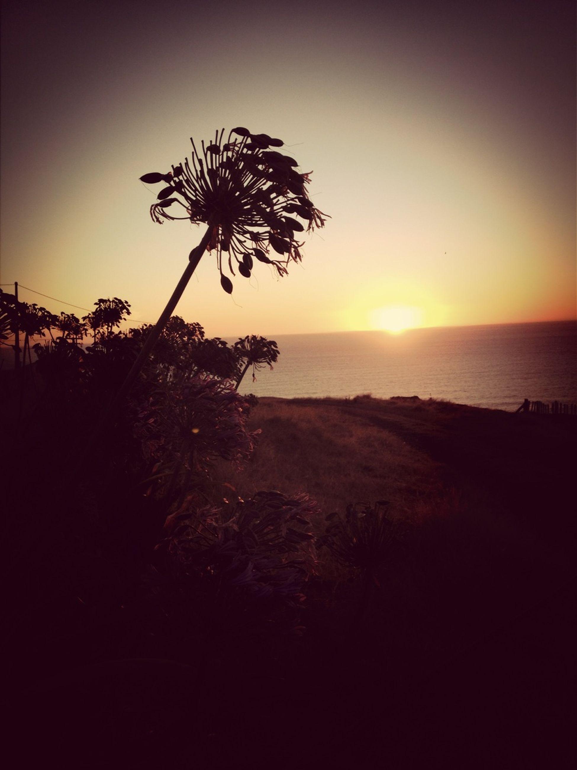 horizon over water, sea, sunset, tranquil scene, beach, scenics, tranquility, water, beauty in nature, shore, sky, nature, silhouette, sun, idyllic, clear sky, orange color, tree, coastline, palm tree
