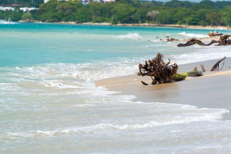 Driftwood At Seashore