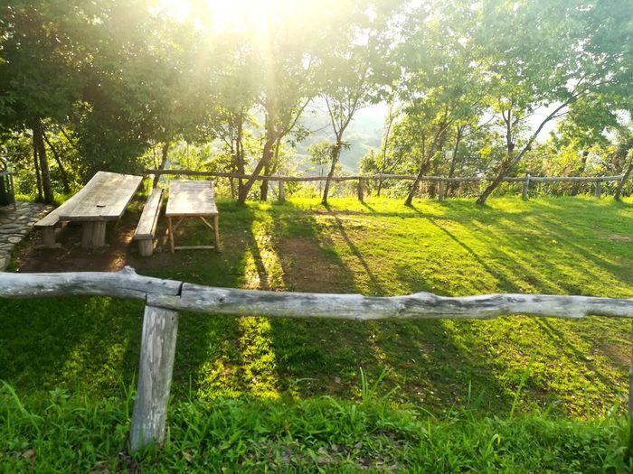 เมื่อแดดมา Tree Sunlight Sky Grass Green Color Wooden Post Barbed Wire Lighthouse Mooring Post