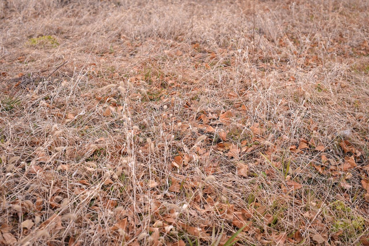 field, nature, no people, day, outdoors, grass, beauty in nature, close-up