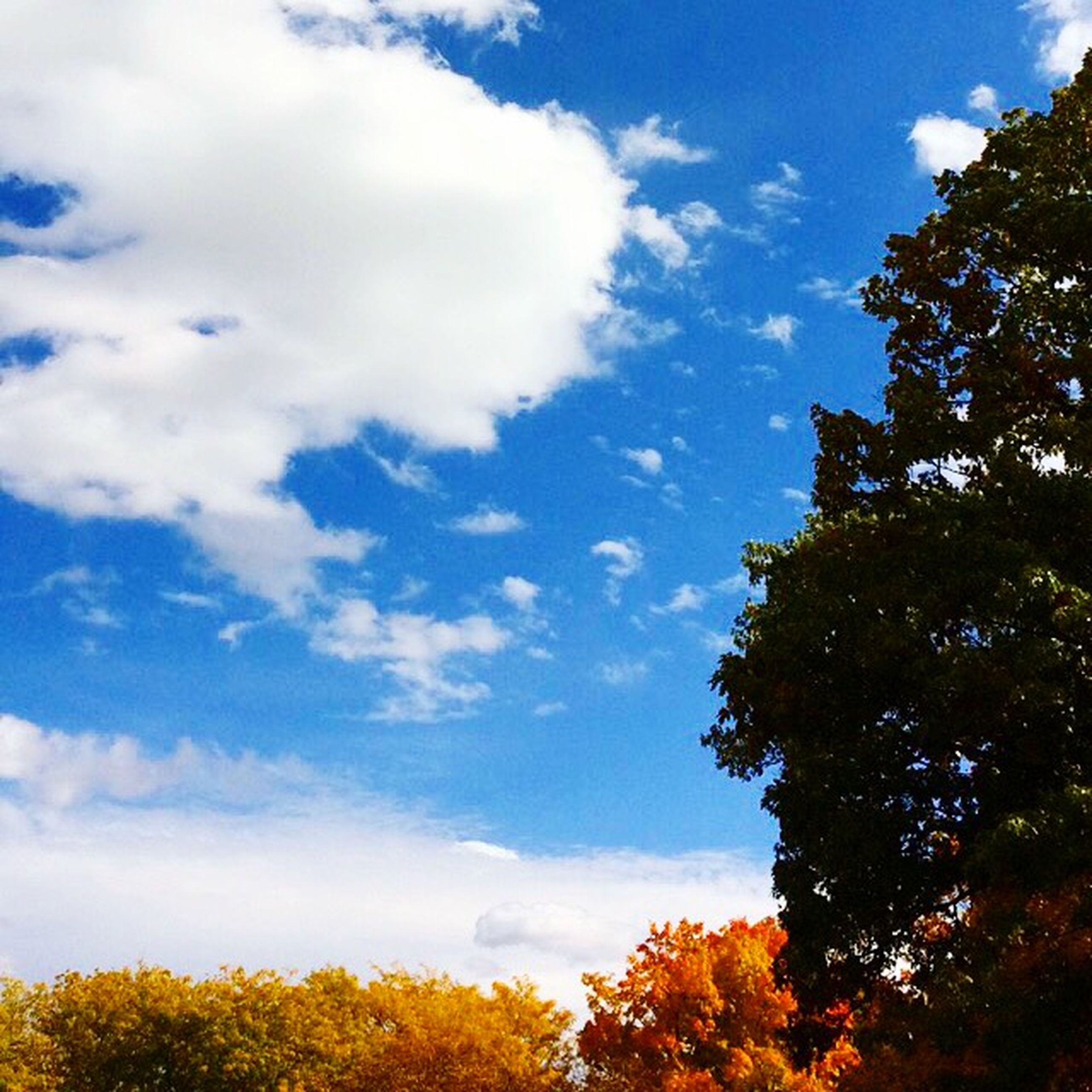tree, low angle view, sky, growth, beauty in nature, yellow, nature, blue, tranquility, cloud - sky, autumn, scenics, branch, change, tranquil scene, cloud, season, high section, no people, treetop