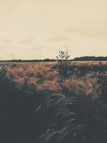 Fieldscape Sky Landscape No People EyeEmNewHere
