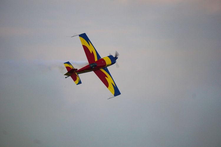 Hawk of Romania