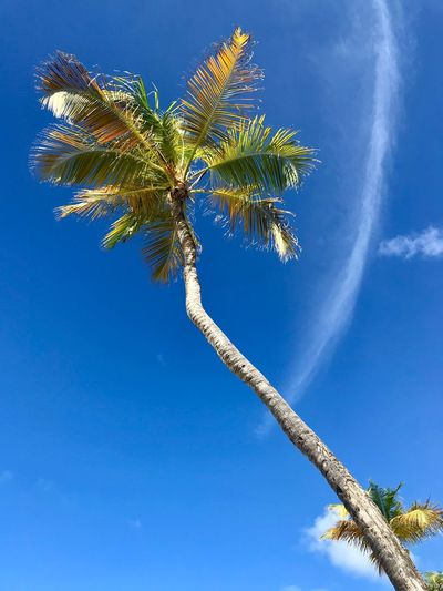 Tropical Antilles Idyllic Paradise Dutch Caribbean Caribbean Blue Low Angle View Tree Nature Day Sky Palm Tree Beauty In Nature Growth Outdoors No People Scenics Tree Trunk Branch Vapor Trail