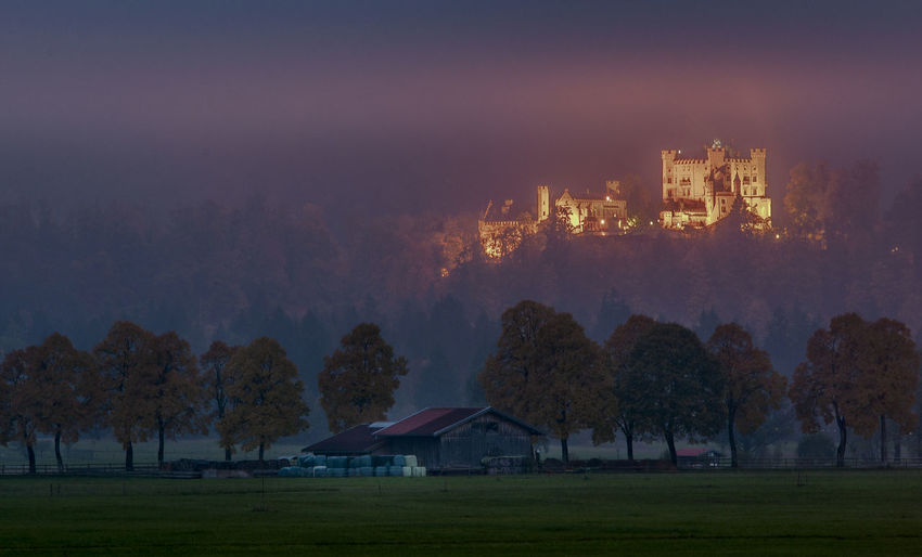 Trees and hohen schwangau castle against misty sunset