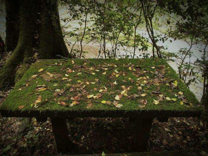 Autumn leaves on tree trunk
