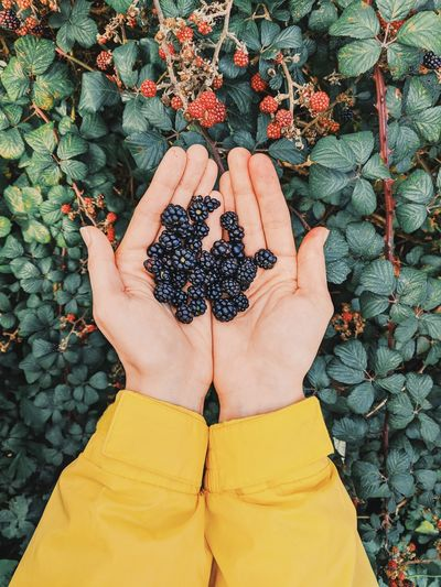 Cropped hand of person holding berries in hand against plants
