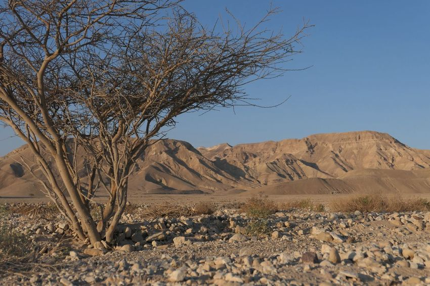 Israel Negev  Sky Scenics - Nature Tranquility Landscape Plant Desert Tranquil Scene Beauty In Nature Nature Land No People Day Arid Climate Tree Climate Clear Sky Environment Non-urban Scene Sunlight