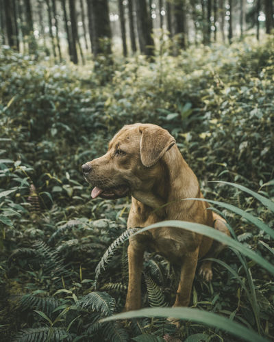 Nature Nature Photography Animal Animal Themes Canine Day Dog Forest Land Nature Nature_collection Naturelovers No People Outdoors Pets Photo Photography Photooftheday Tree