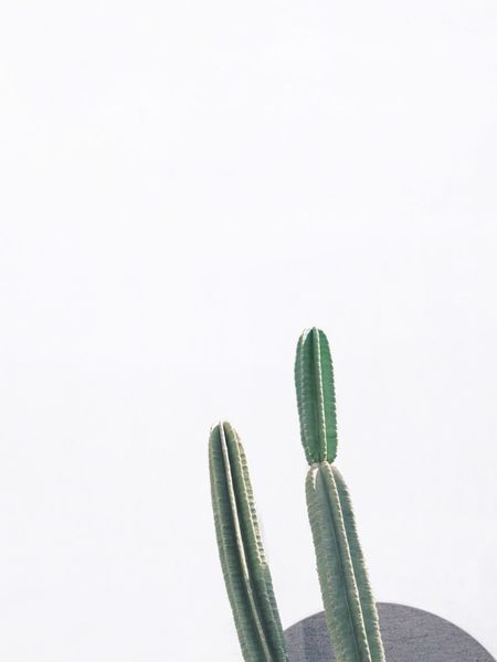 Close-up Simplicity Minimalism Nature Plant Green Color Geometry Geometric Shape Cactus White Background Copy Space Studio Shot No People Close-up Day Creative Space