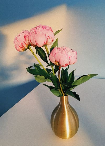 Flower Flowering Plant Plant Freshness Vulnerability  Nature Fragility Beauty In Nature Close-up Pink Color Flower Head Vase No People Petal Inflorescence Shadow Plant Part Day Sunlight Leaf