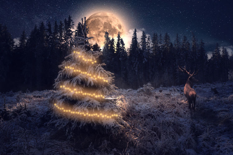 Rear view of reindeer standing by illuminated christmas tree on field against trees and sky