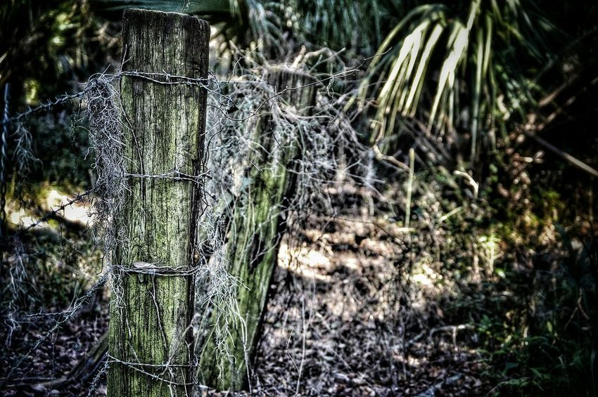 Playing with some barbed wire... Barbed Wire Nature Getting In Touch Hiking Outdoors Path