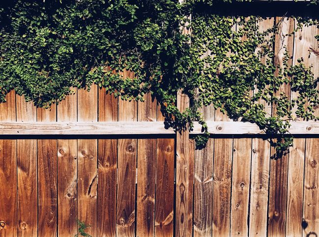 Nature Photography Fence Outdoors