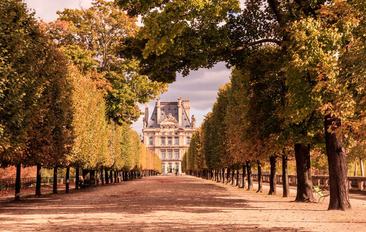 If Trees Could Speak Iftreescouldspeak France Louvre Paris Paris ❤ Paris, France  Trees Arch Architecture Autumn Beauty In Nature Building Exterior Built Structure Change Day Growth Leaf Museum Nature No People Outdoors Parisian Scenics Sky The Way Forward Travel Destinations EyeEmNewHere