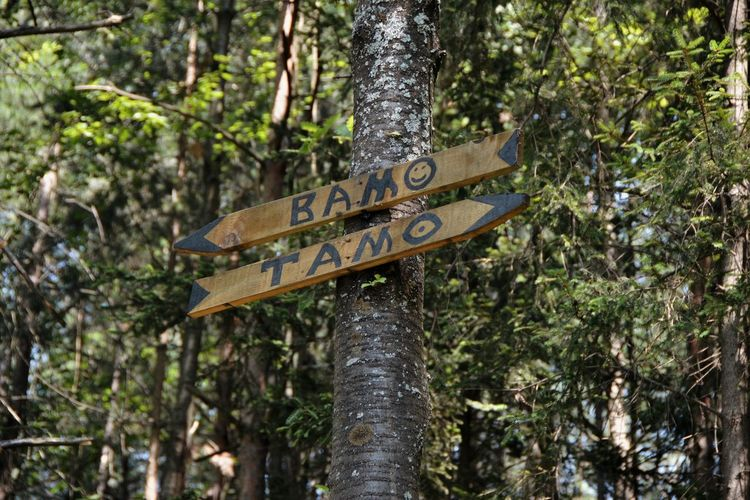 Low angle view of sign by trees in forest
