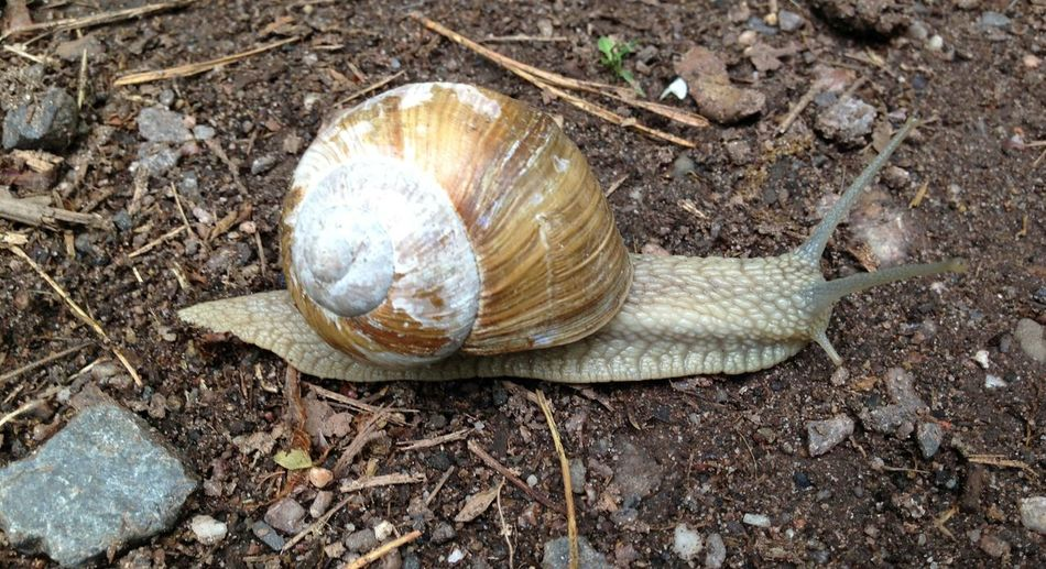 Close-up of snail shell