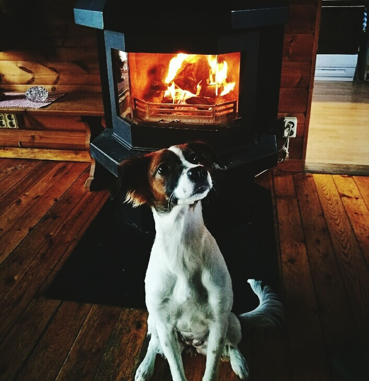 fireplace, dog, flame, pets, indoors, domestic animals, burning, home interior, one animal, animal themes, no people, wood - material, heat - temperature, mammal, sitting, full length, close-up, day